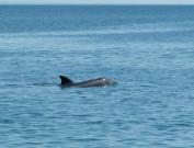 Ручной дельфин, Пицунда
