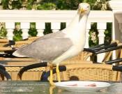 Птица по Хичкоку