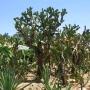 Кактусовый сад в Балчике