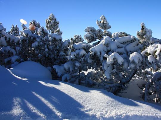 Елочки в горах Боровца