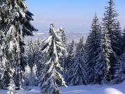 Зимний Боровец