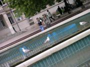 Чайки в центре Варны