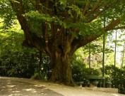 В Батумском ботаническом саду