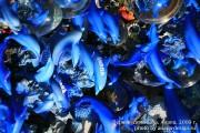 Китайские дельфины в Анапе