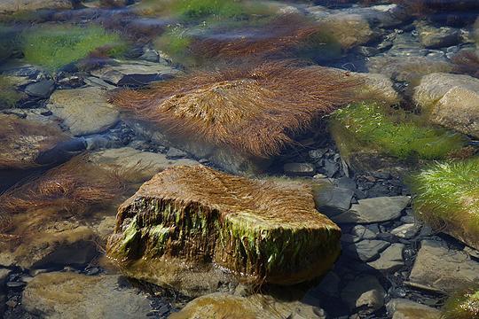 Морские волосатики