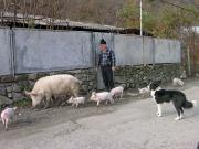 В одном из поселков в горах у Красной Поляны