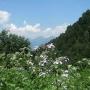 Цветы на Красной поляне
