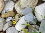 Камушки в Лазаревском
