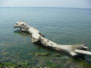 Черное море в Джубге