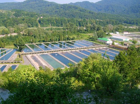 Дмитровчане могут построить в Крыму форелевое хозяйство