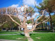Дерево в Анапе
