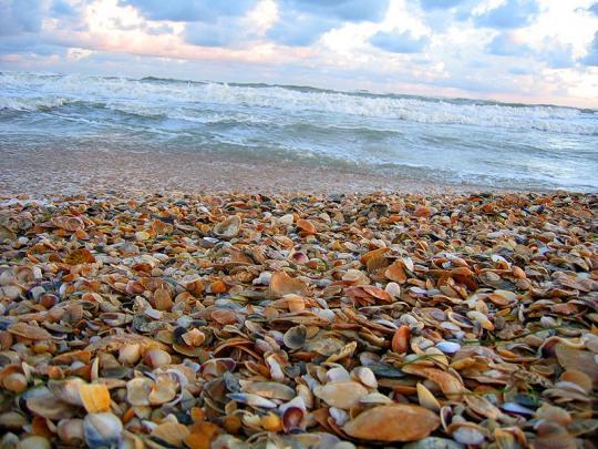 Ракушечки на пляже в Аанпе
