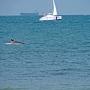 Дельфин в Геленджикской бухте
