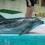 Дельфинарий в Геленджике