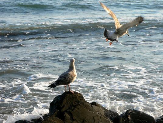 Ольгинка, чайки