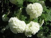 Цветочки в Дендрарии