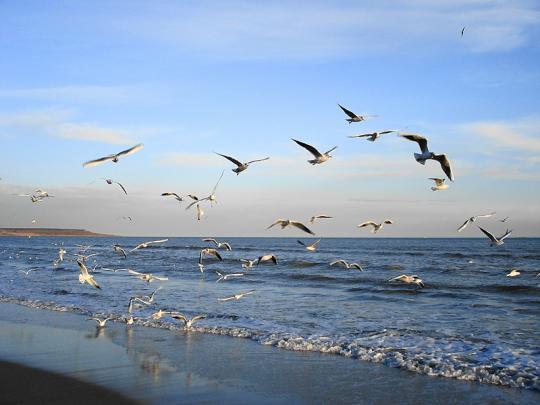 Чайки в Одессе