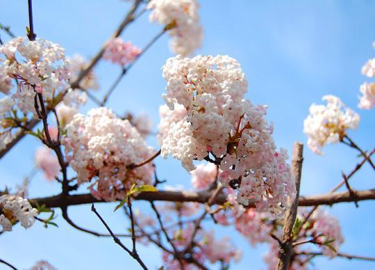 Весна в Одессе