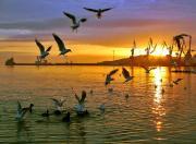 Закат и чайки