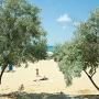 Аркона: Пляж